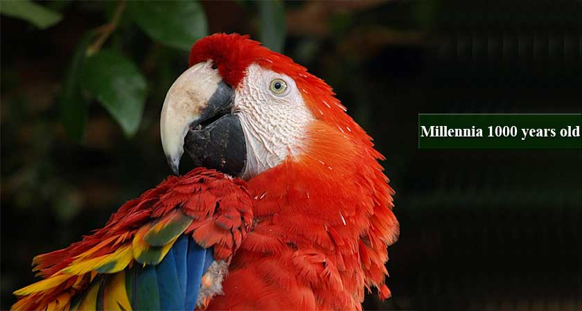 Scientists in Southwest America Discover a Millennia-old Parrot-Breeding Operation
