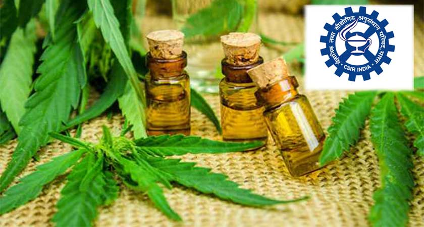 CSIR – IIIM seeks to produce drugs from cannabis that can be useful in the treatment of cancer, epilepsy and sickle cell anaemia