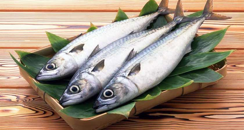 IIT Researchers Develops a New Fodder for Fish