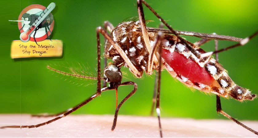 New Technology Helps in Dengue Fight: Mass Production of Mosquitoes to Control Disease Carrying Mozzies