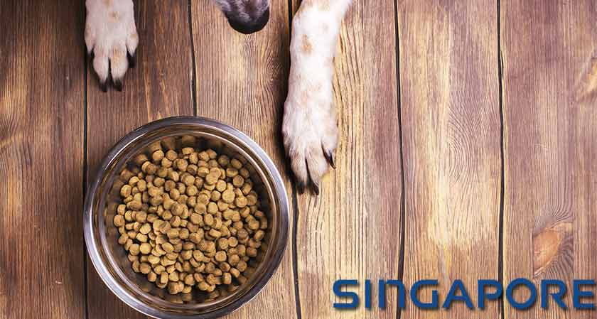 Singapore to launch first-ever palatable and nutritious insect-based pet food