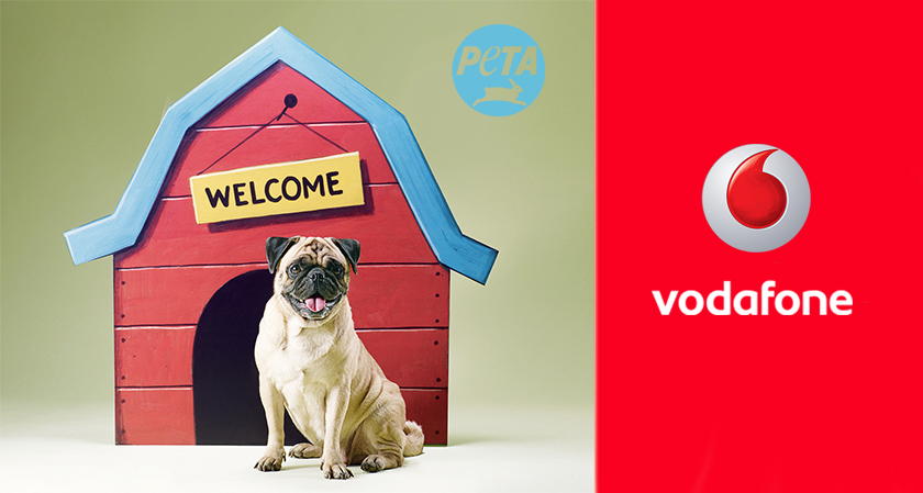 Vodafone requested by PETA not to use pugs in advertisements